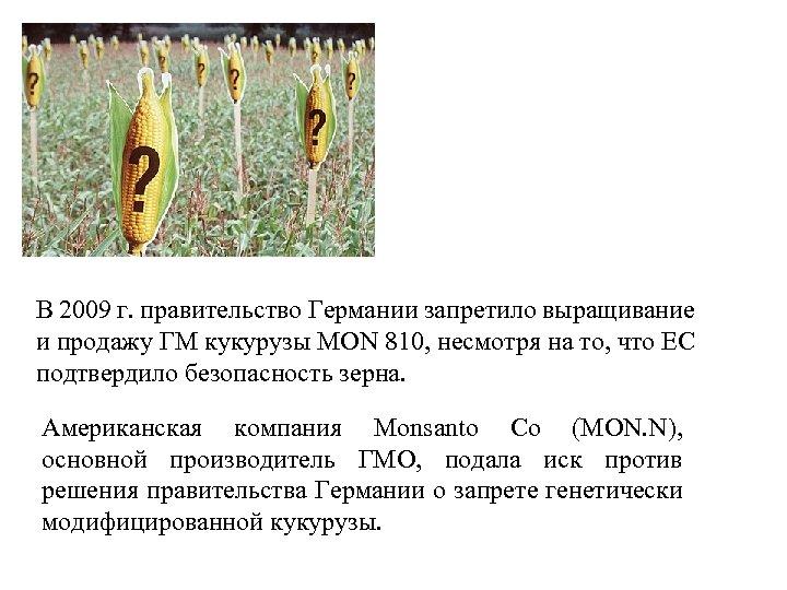 В 2009 г. правительство Германии запретило выращивание и продажу ГМ кукурузы MON 810, несмотря