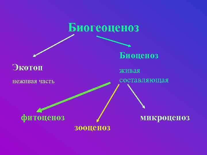 Биогеоценоз Биоценоз Экотоп живая составляющая неживая часть фитоценоз зооценоз микроценоз