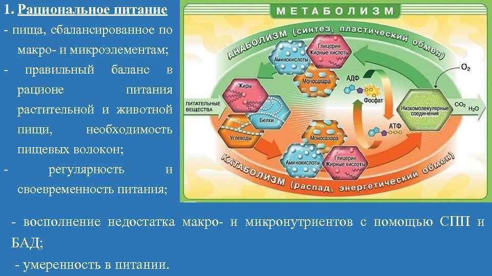 1. Рациональное питание пища, сбалансированное по макро и микроэлементам; правильный баланс в рационе питания
