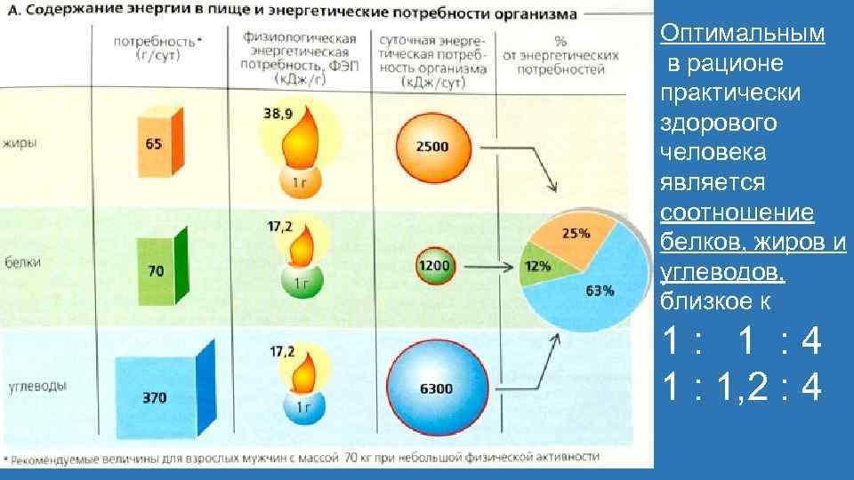 Оптимальным в рационе практически здорового человека является соотношение белков, жиров и углеводов, близкое к