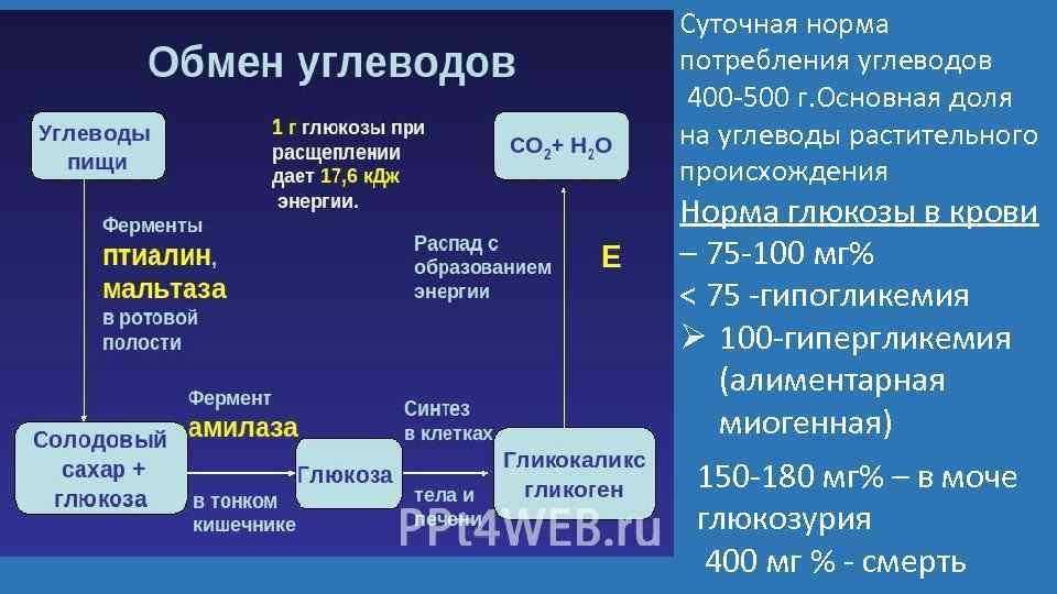 Суточная норма потребления углеводов 400 -500 г. Основная доля на углеводы растительного происхождения Норма
