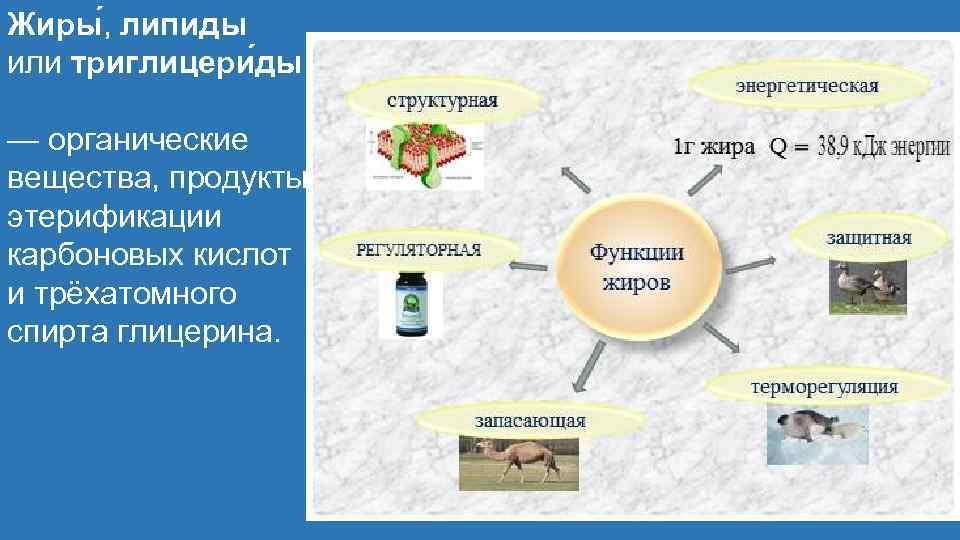 Жиры , липиды или триглицери ды — органические вещества, продукты этерификации карбоновых кислот и