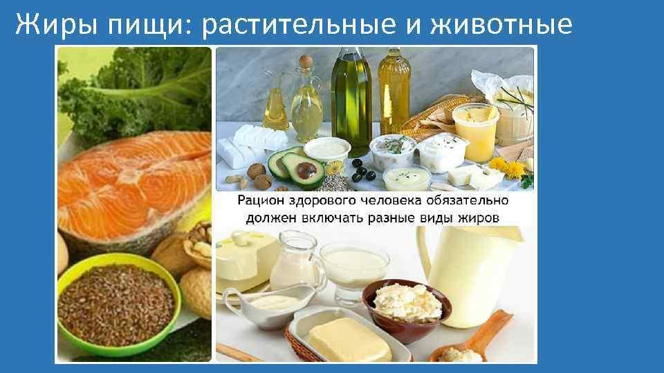 Жиры пищи: растительные и животные