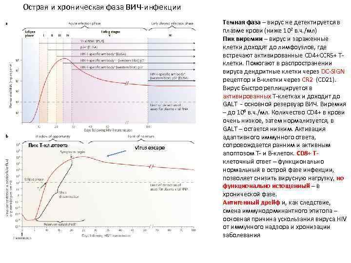 Острая и хроническая фаза ВИЧ-инфекции Пик Т-кл. ответа virus escape Темная фаза – вирус