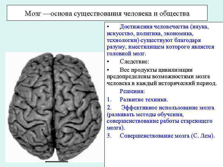 Мозг ––основа существования человека и общества • Достижения человечества (наука, искусство, политика, экономика, технологии)