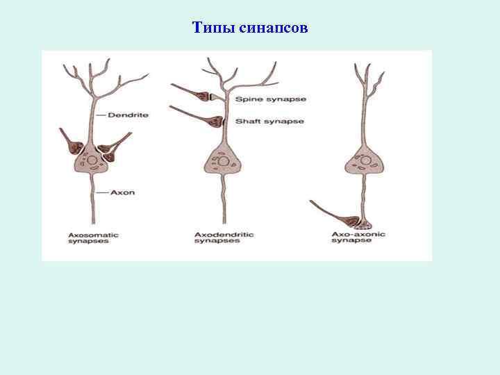 Типы синапсов