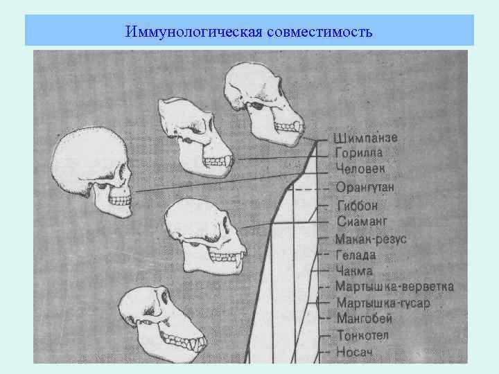 Иммунологическая совместимость