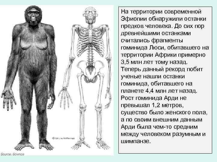 На территории современной Эфиопии обнаружили останки предков человека. До сих пор древнейшими останками считались