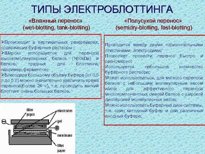 ТИПЫ ЭЛЕКТРОБЛОТТИНГА «Влажный перенос» (wet-blotting, tank-blotting) ØПроисходит в вертикальных резервуарах, содержащих буферные растворы ;