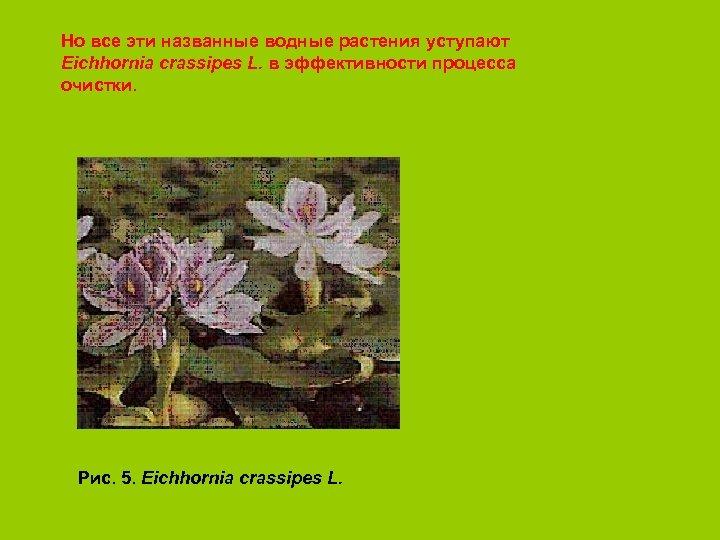 Но все эти названные водные растения уступают Eichhornia crassipes L. в эффективности процесса очистки.