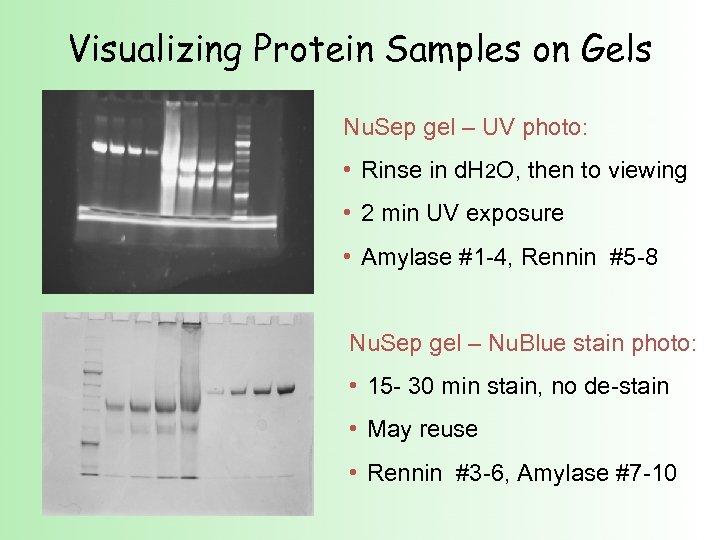 Visualizing Protein Samples on Gels Nu. Sep gel – UV photo: • Rinse in