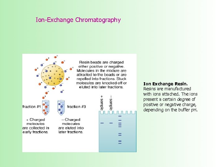 Ion-Exchange Chromatography Ion Exchange Resins are manufactured with ions attached. The ions present a