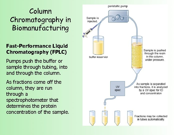 Column Chromatography in Biomanufacturing Fast-Performance Liquid Chromatography (FPLC) Pumps push the buffer or sample