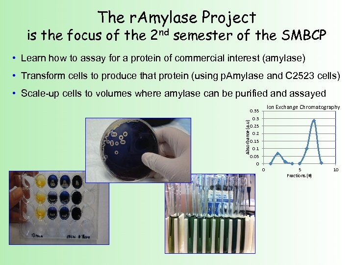 The r. Amylase Project is the focus of the 2 nd semester of the