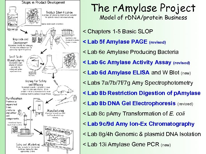 The r. Amylase Project Model of r. DNA/protein Business < Chapters 1 -5 Basic