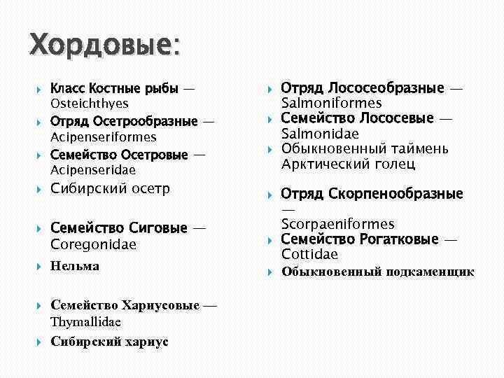Хордовые: Класс Костные рыбы — Osteichthyes Отряд Осетрообразные — Acipenseriformes Семейство Осетровые — Acipenseridae