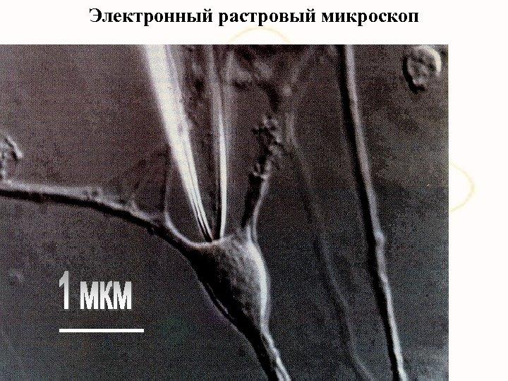 Электронный растровый микроскоп