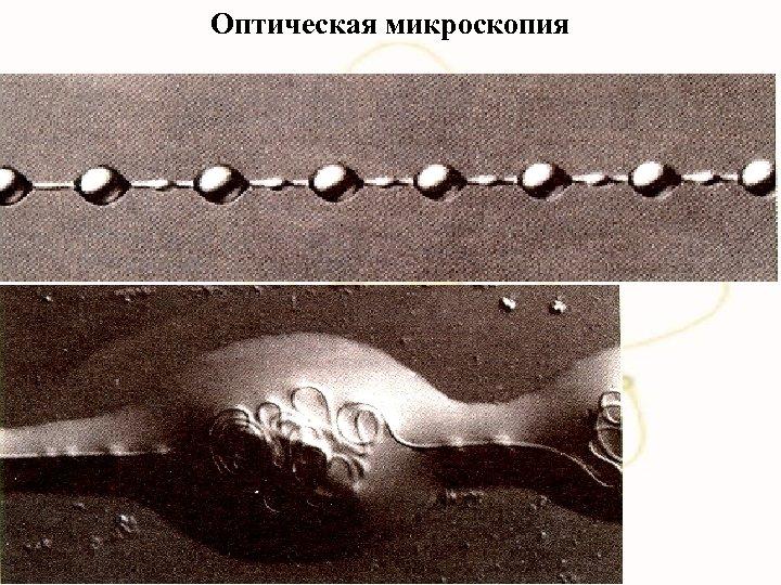 Оптическая микроскопия