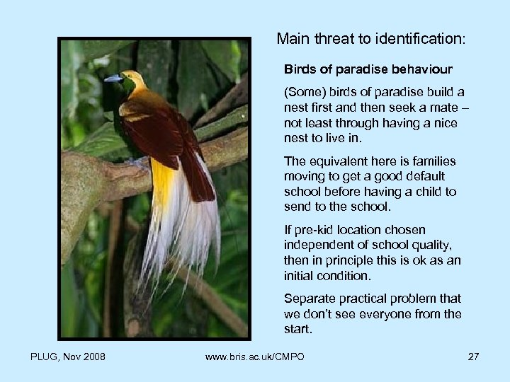 Main threat to identification: Birds of paradise behaviour (Some) birds of paradise build a