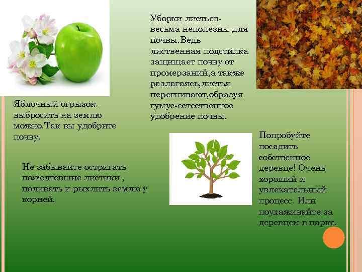 Яблочный огрызоквыбросить на землю можно. Так вы удобрите почву. Не забывайте остригать пожелтевшие листики