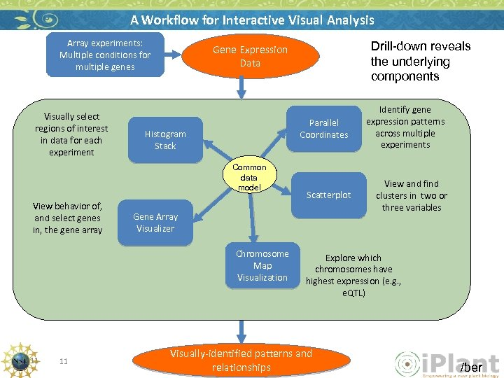 A Workflow for Interactive Visual Analysis Array experiments: Multiple conditions for multiple genes Visually