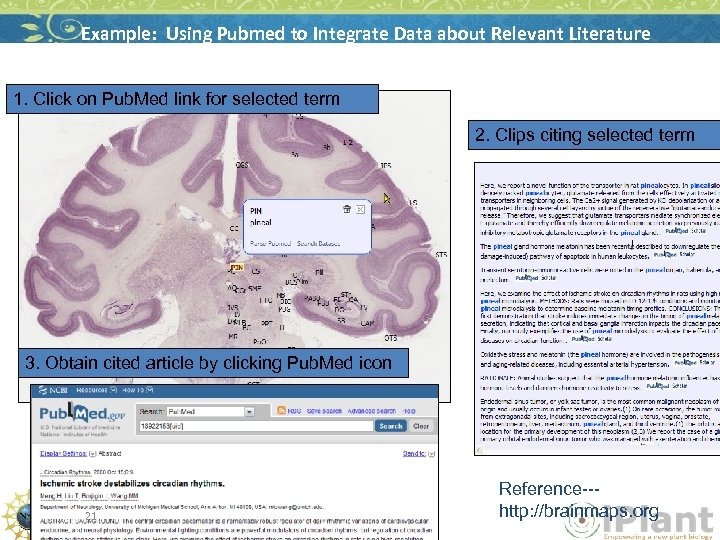 Example: Using Pubmed to Integrate Data about Relevant Literature 1. Click on Pub. Med