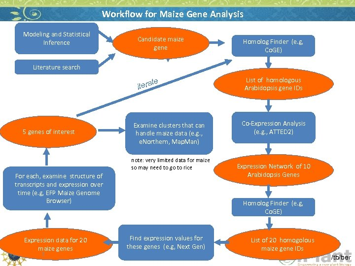 Workflow for Maize Gene Analysis Modeling and Statistical Inference Candidate maize gene Homolog Finder