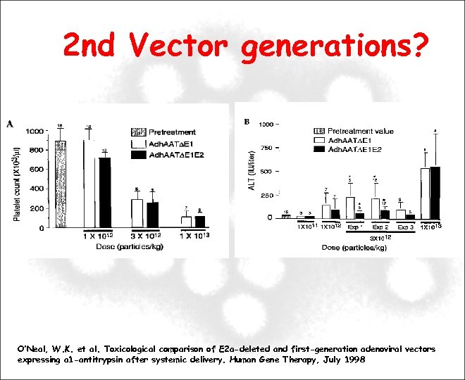 2 nd Vector generations? O'Neal, W. K. et al. Toxicological comparison of E 2
