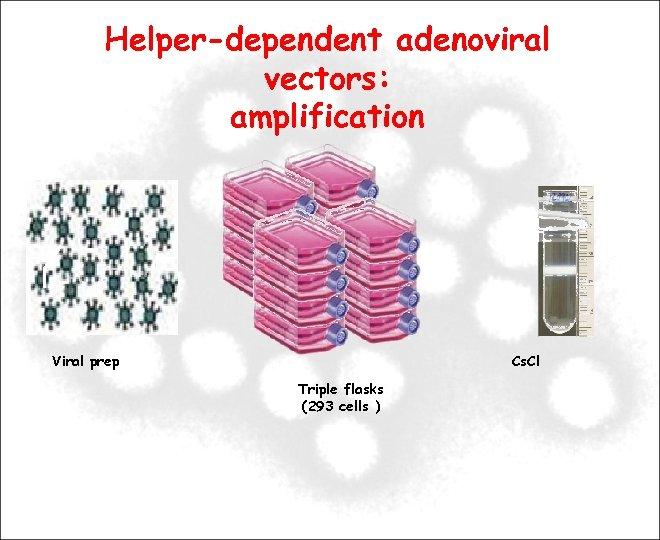Helper-dependent adenoviral vectors: amplification Viral prep Cs. Cl Triple flasks (293 cells )