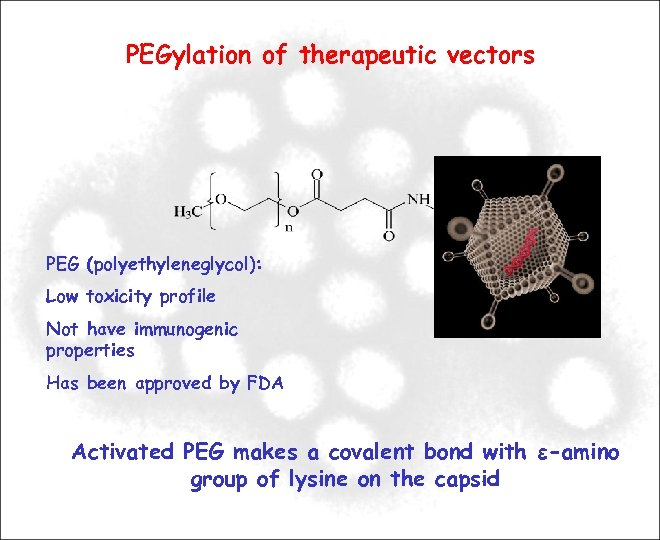 PEGylation of therapeutic vectors PEG (polyethyleneglycol): Low toxicity profile Not have immunogenic properties Has