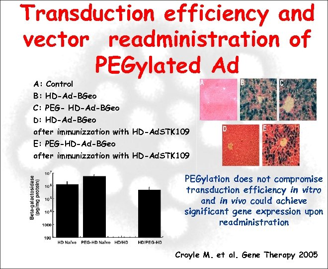 Transduction efficiency and vector readministration of PEGylated Ad A: Control B: HD-Ad-BGeo C: PEG-