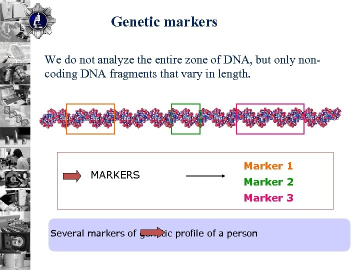 Genetic markers We do not analyze the entire zone of DNA, but only noncoding