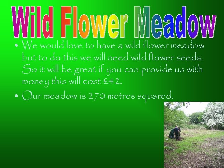 • We would love to have a wild flower meadow but to do