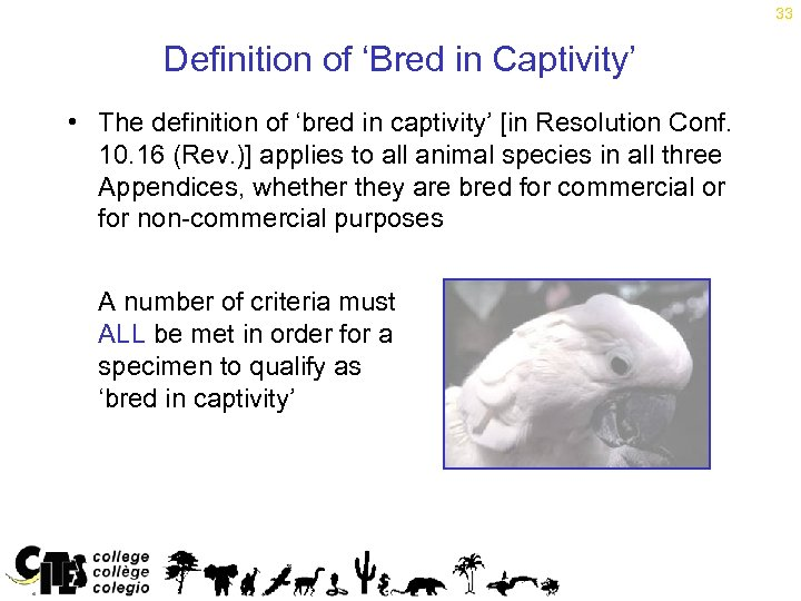 33 Definition of 'Bred in Captivity' • The definition of 'bred in captivity' [in