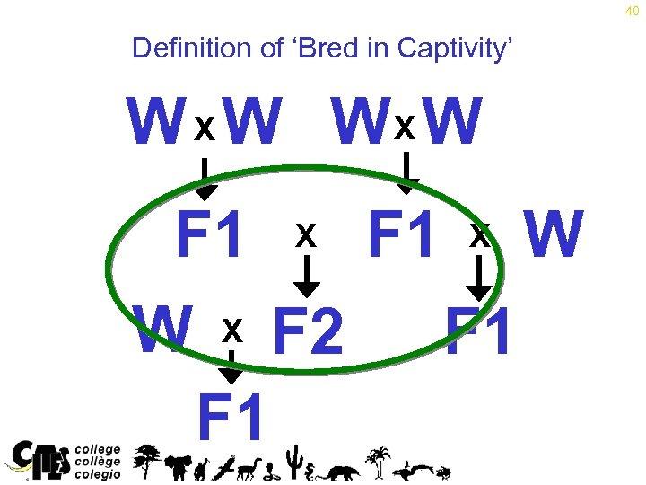 40 Definition of 'Bred in Captivity' W X W WX W F 1 X