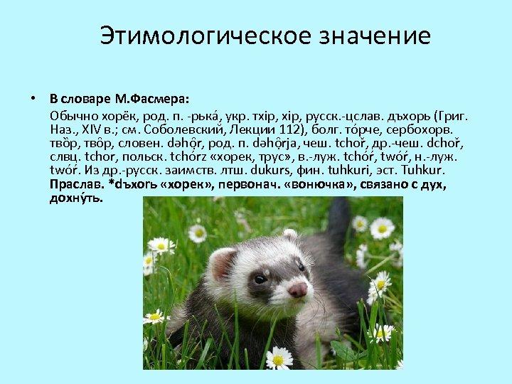 Этимологическое значение • В словаре М. Фасмера: Обычно хоре к, род. п. -рька ,