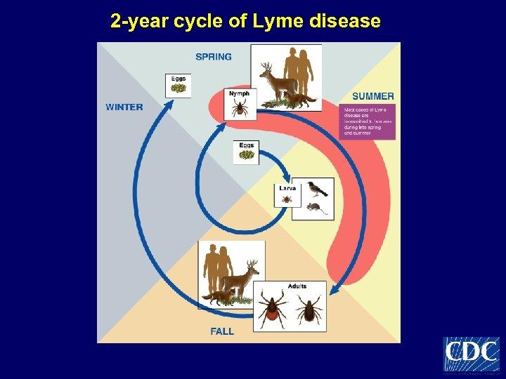 2 -year cycle of Lyme disease