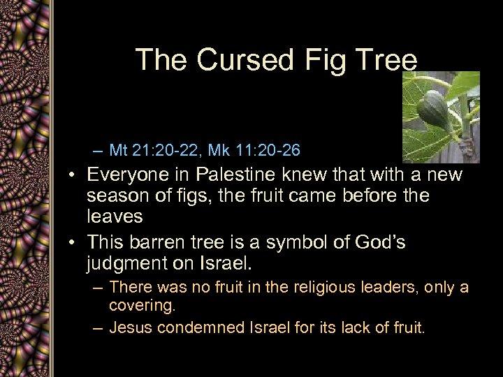The Cursed Fig Tree – Mt 21: 20 -22, Mk 11: 20 -26 •