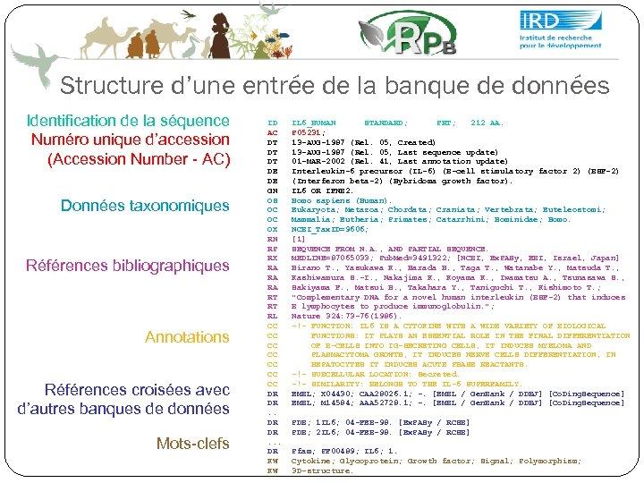 Structure d'une entrée de la banque de données Identification de la séquence Numéro unique