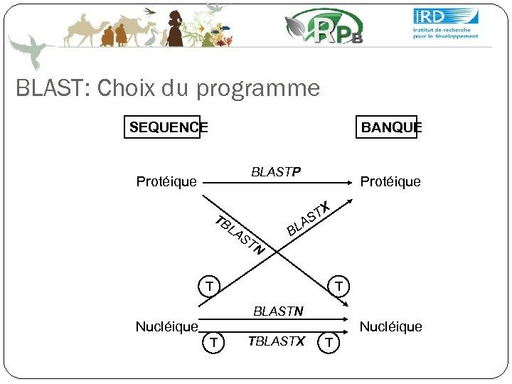 BLAST: Choix du programme SEQUENCE BANQUE BLASTP Protéique TB LA ST N ST A
