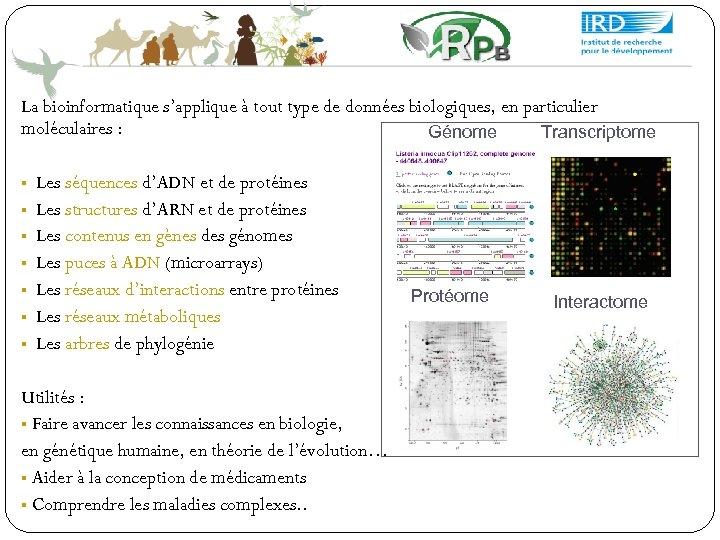 La bioinformatique s'applique à tout type de données biologiques, en particulier moléculaires : Génome