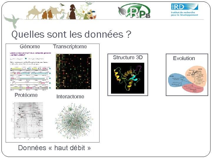 Quelles sont les données ? Génome Transcriptome Structure 3 D Protéome Interactome Données «