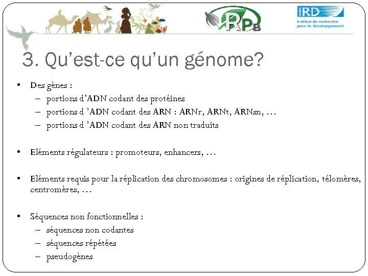 3. Qu'est-ce qu'un génome? • Des gènes : – portions d'ADN codant des protéines