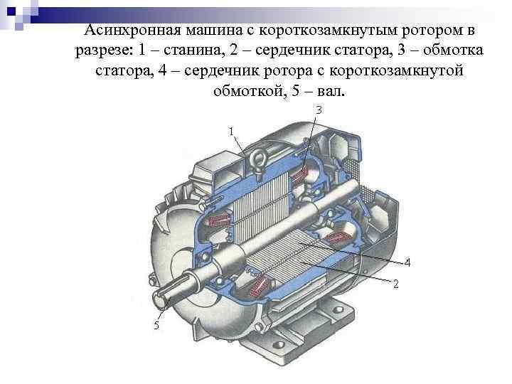 Асинхронная машина с короткозамкнутым ротором в разрезе: 1 – станина, 2 – сердечник статора,
