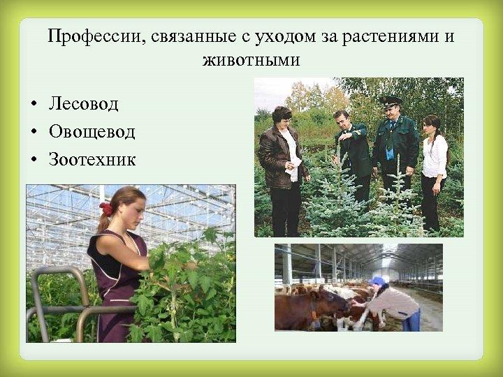 Профессии, связанные с уходом за растениями и животными • Лесовод • Овощевод • Зоотехник