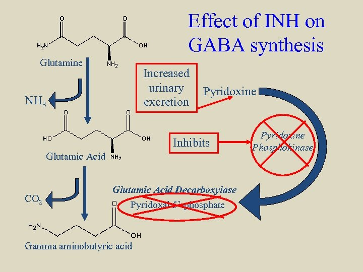 Effect of INH on GABA synthesis Glutamine Increased urinary excretion NH 3 Pyridoxine Inhibits
