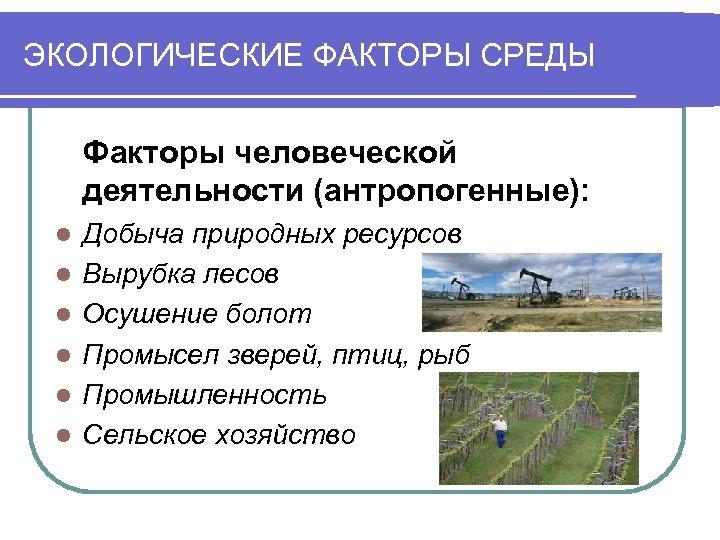 ЭКОЛОГИЧЕСКИЕ ФАКТОРЫ СРЕДЫ Факторы человеческой деятельности (антропогенные): l l l Добыча природных ресурсов Вырубка