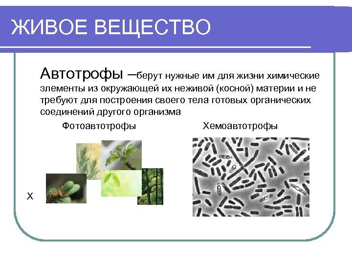 ЖИВОЕ ВЕЩЕСТВО Автотрофы –берут нужные им для жизни химические элементы из окружающей их неживой