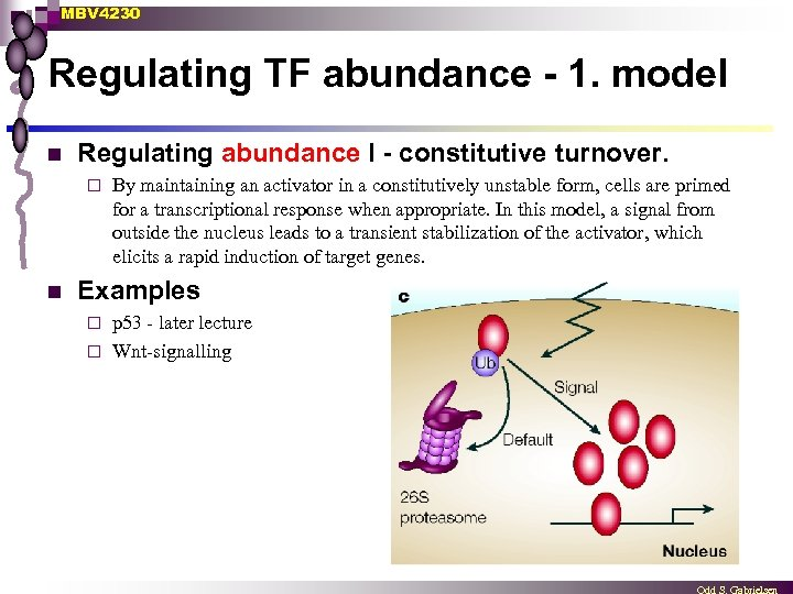MBV 4230 Regulating TF abundance - 1. model n Regulating abundance I - constitutive