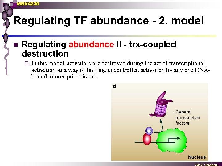 MBV 4230 Regulating TF abundance - 2. model n Regulating abundance II - trx-coupled
